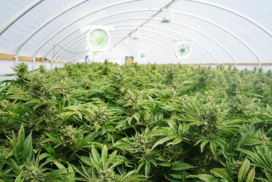 Security Planning for Arkansas Cannabis Facilities
